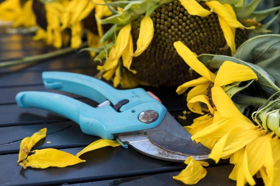 Garden Scissors 3 Safety