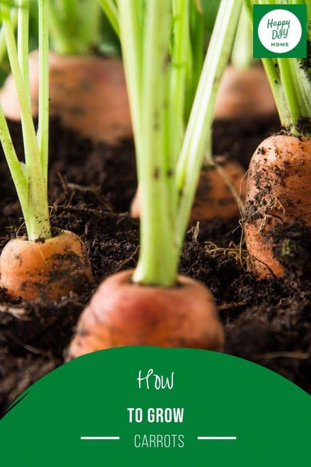 Grow Carrots 2