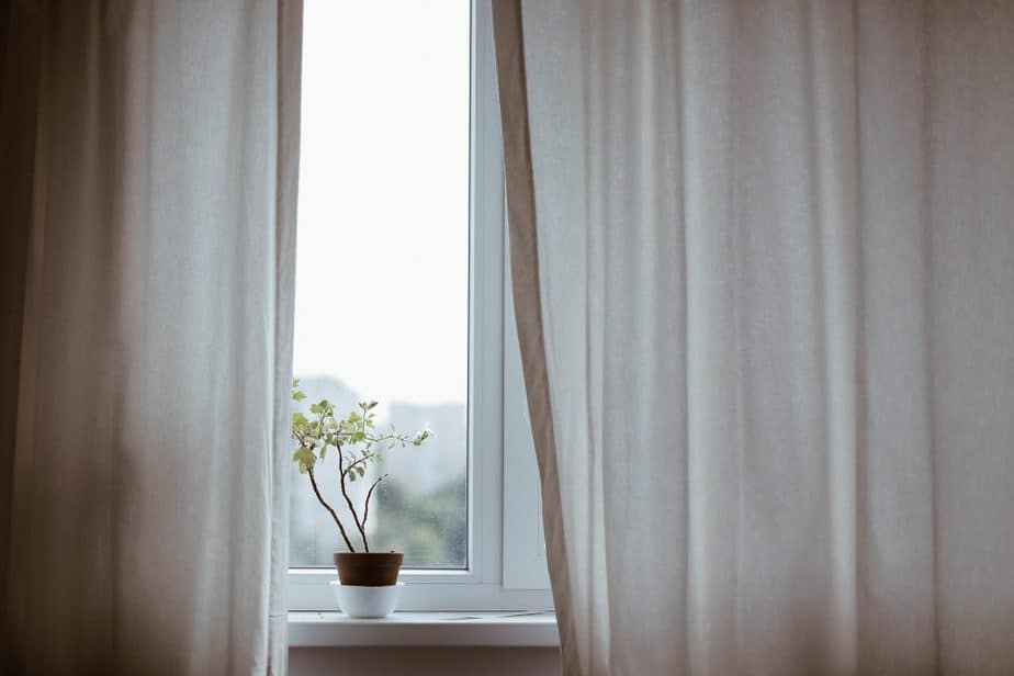 Oleander 6 Wintering