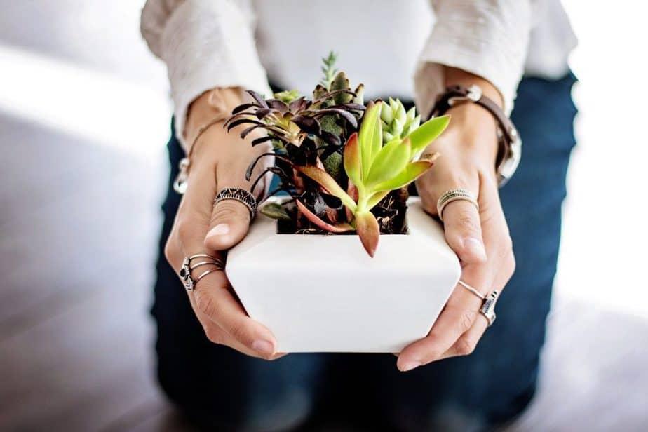 Planting Zones 1 Indoors