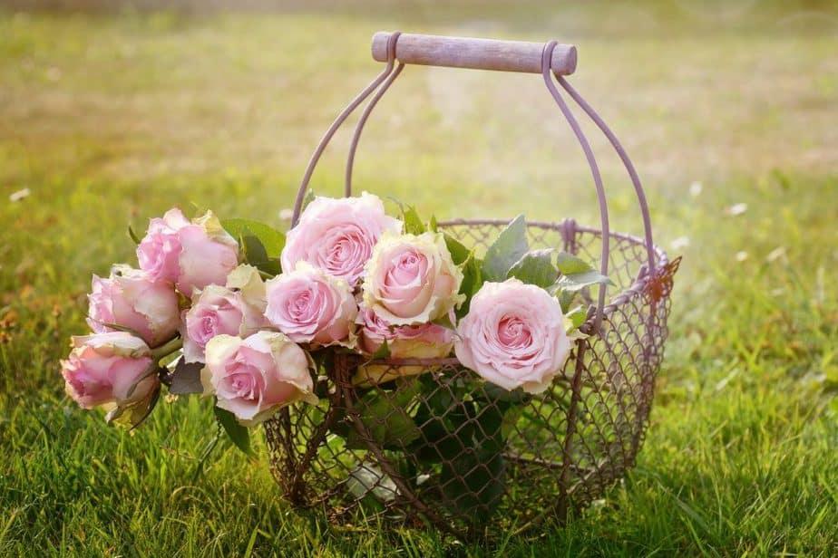 Repel Ticks 15 Roses