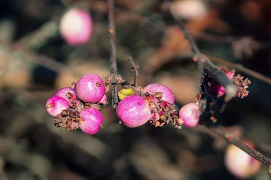 Repel Ticks 2 Beautyberry