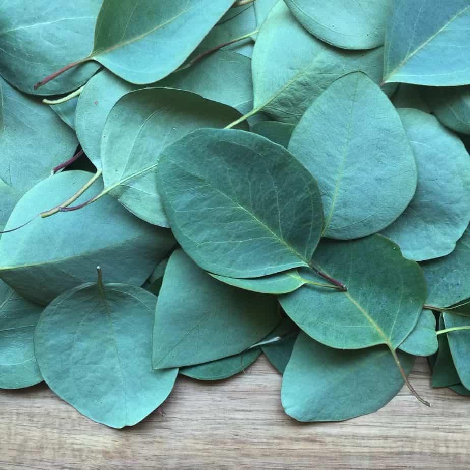 Repel Ticks 20 Eucalyptus