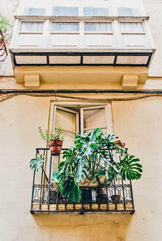 14 Oversized Plants