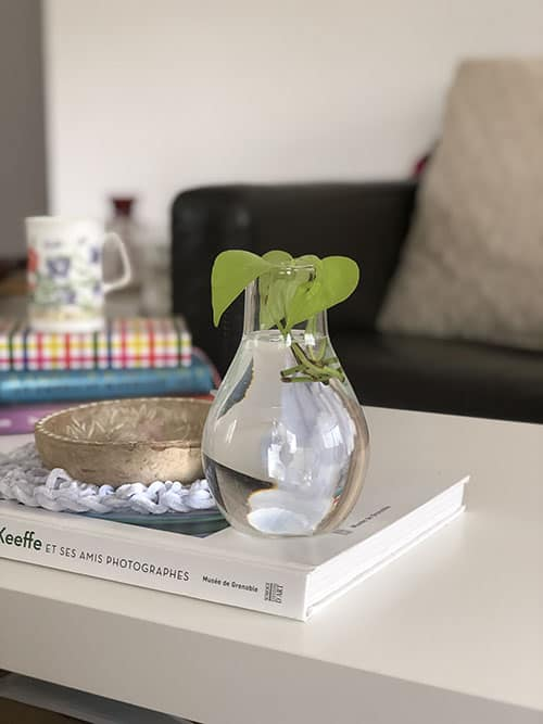 14. How to Grow and Care for Pothos