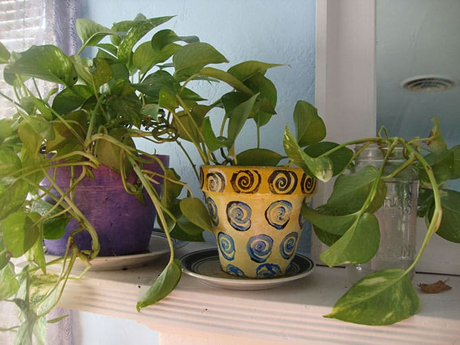 15. How to Grow and Care for Pothos