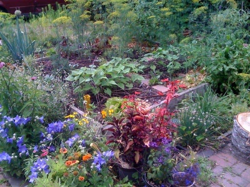 2 Vegetable Garden Layout