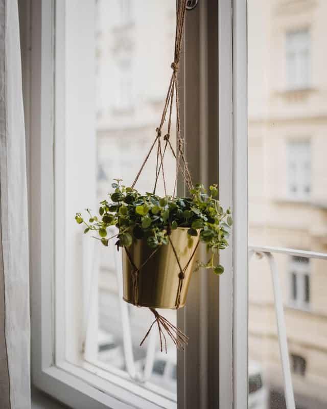2. Hanging Plant Holder