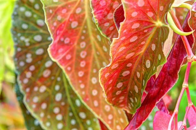 6 When sited in the correct position the colors and pattern of the plant's foliage becomes more intense