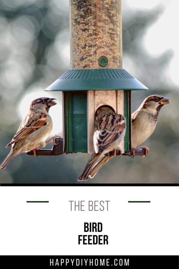 Best Bird Feeder 1