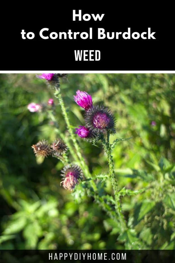 Burdock Weed 2