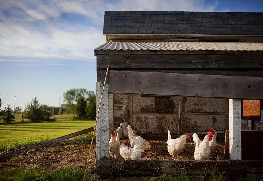 Chicken Coop 7 End