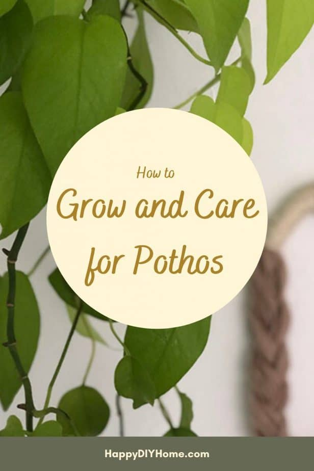 How to Grow and Care for Pothos Pinterest Pin