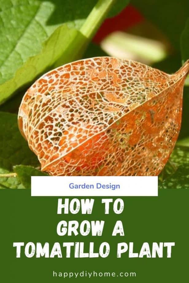 Tomatillo Plant Cover Image