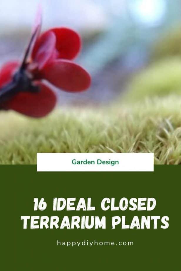 16 Ideal Closed Terrarium Plants cover image