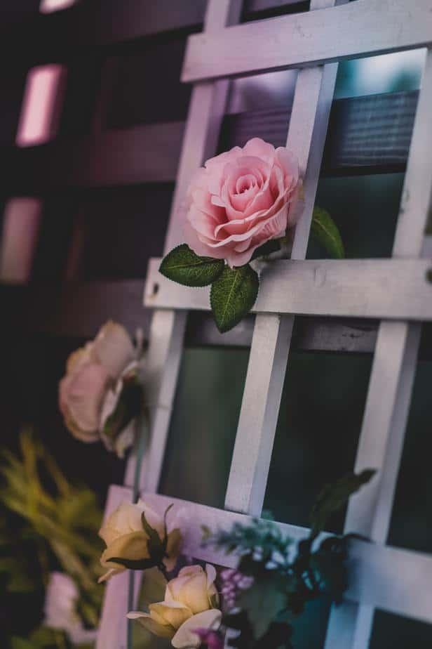 2. Rose Trellis