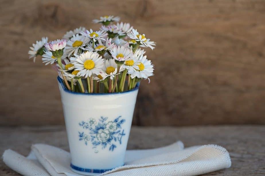 3 Daisies in Vase