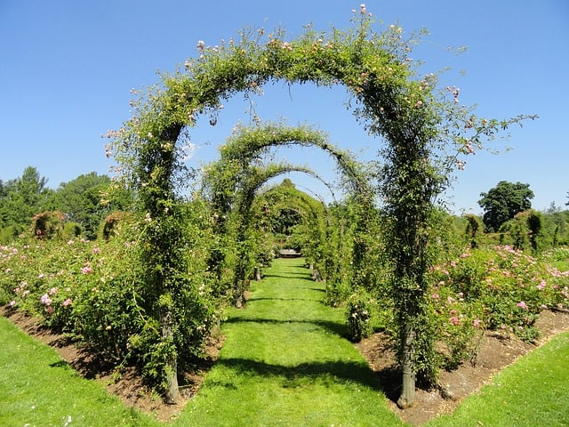 4. Arch Pathway