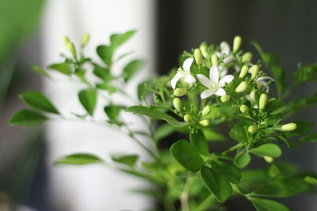 7 Exposure to cooler temperatures is vital if you want your plants to flower