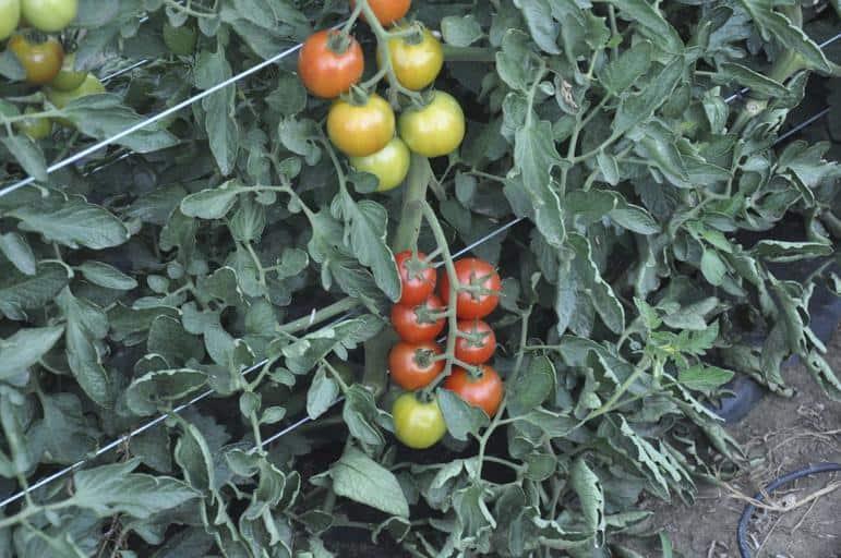 7. Vegetable Garden
