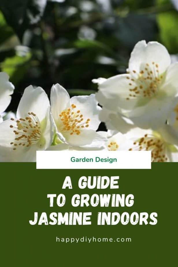 Growing Jasmine Indoors cover image