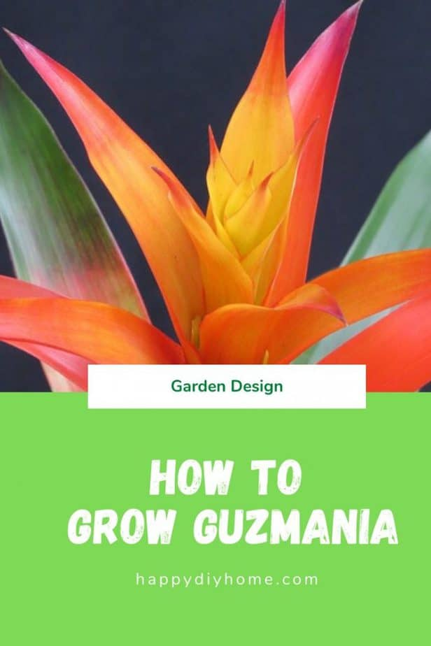 Guzmania cover image
