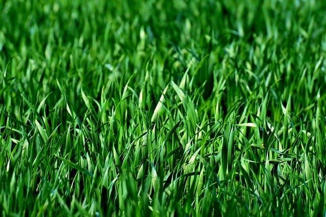 Lawn 3 Type