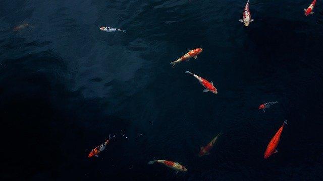 Pond 2 Fish