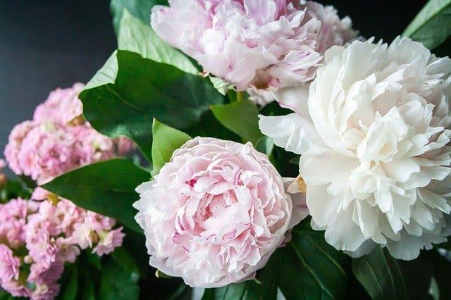 1 Fabulously showy flowers