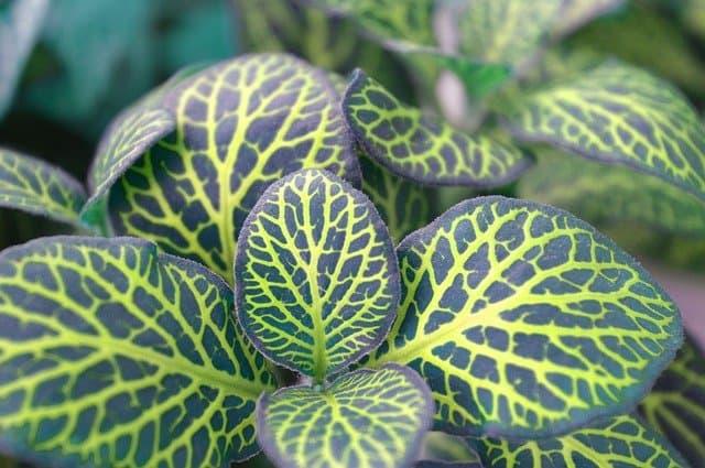 6. Green Veins
