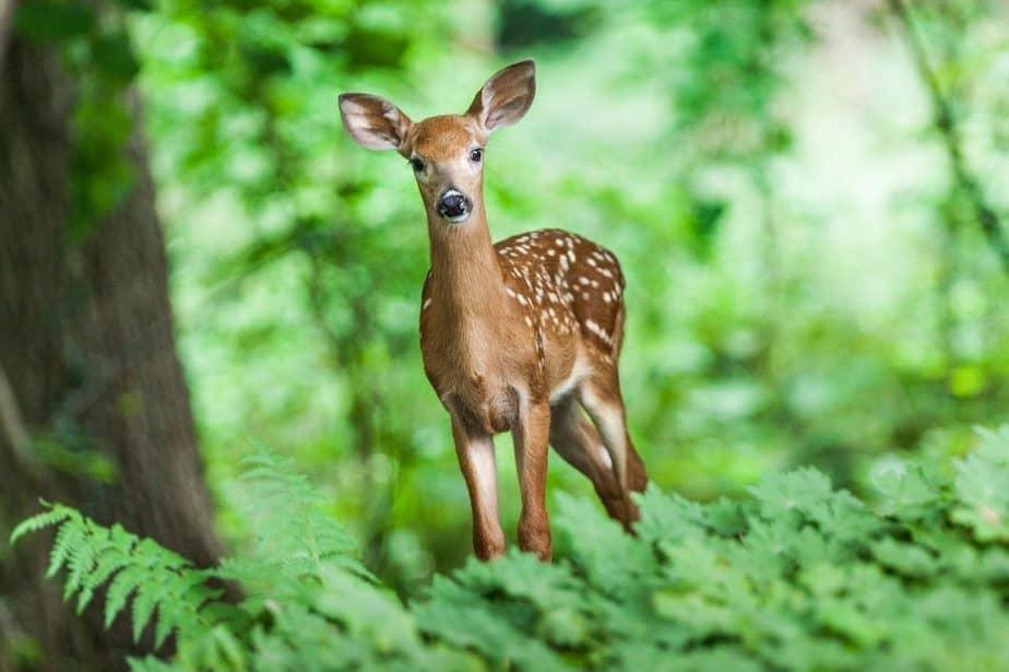 9 Deer