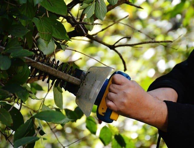 Hedge Trimmer 1 Start
