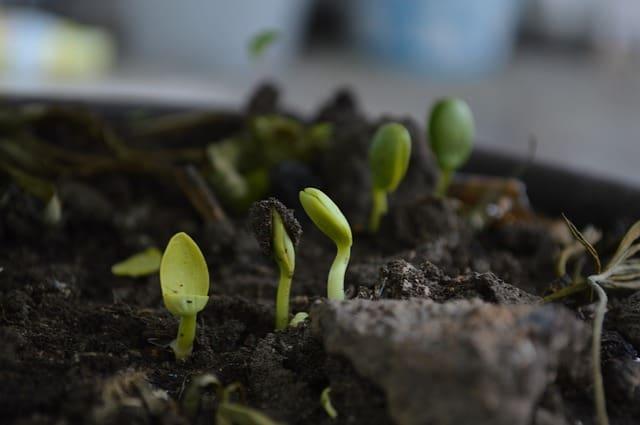 Soil 3 End