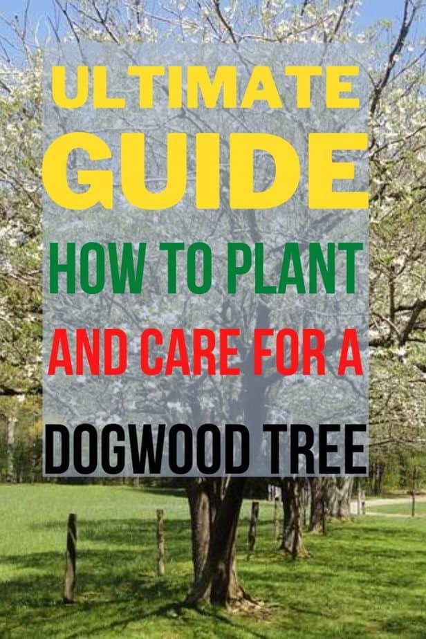 1 How to Grow Dogwood Tree