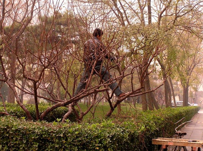 10 trim tree