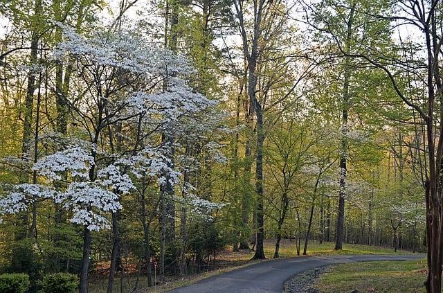 11 dogwood natural habitat