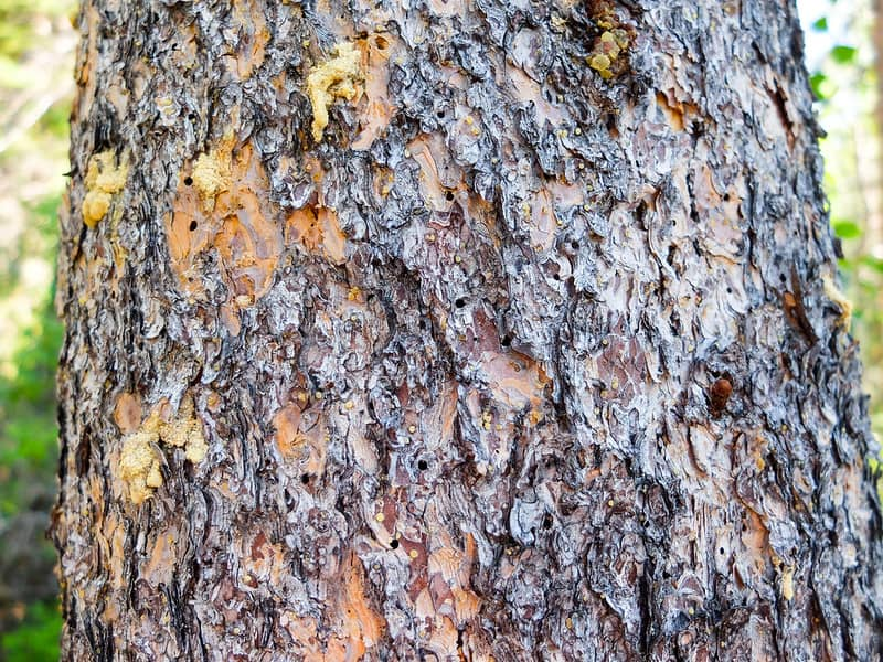 15 damaged bark
