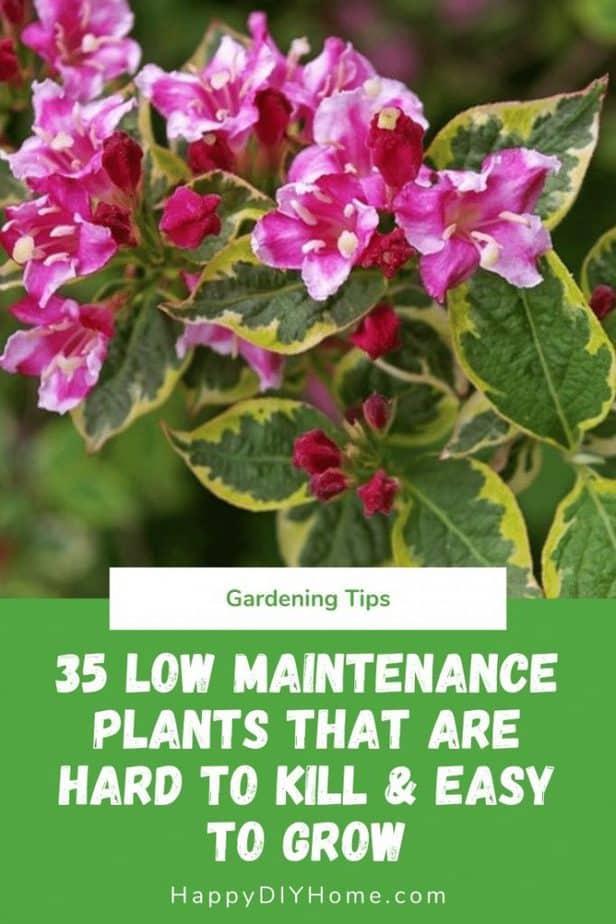 35 Low Maintenance Plants
