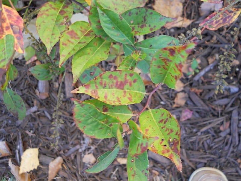 6 diseased leaves