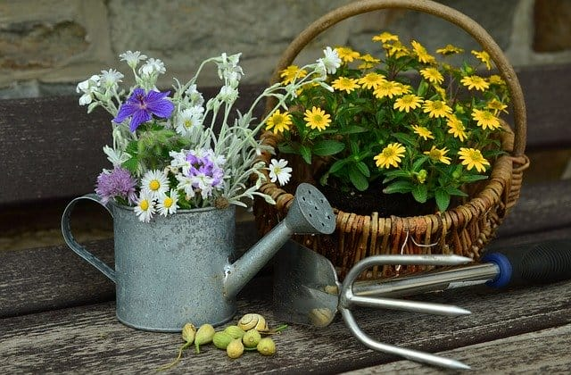 Watering Can 1 Start