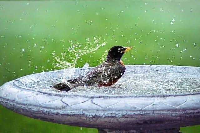1 Bird Splashing in a Bath