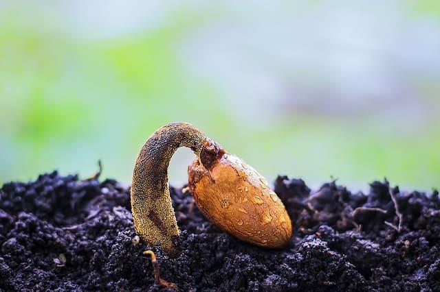 5 Seed Germinating