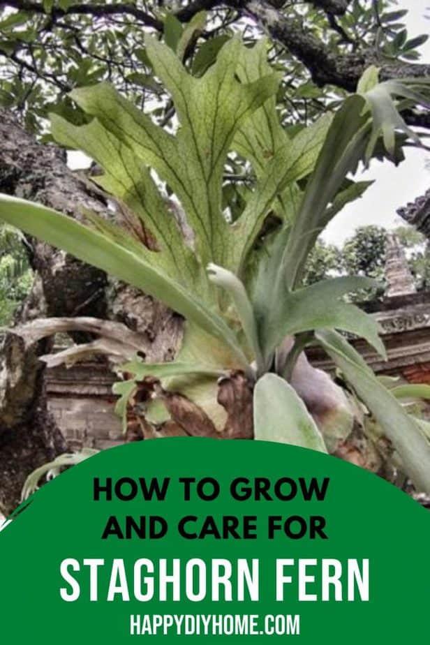 5. Growing Staghorn Fern