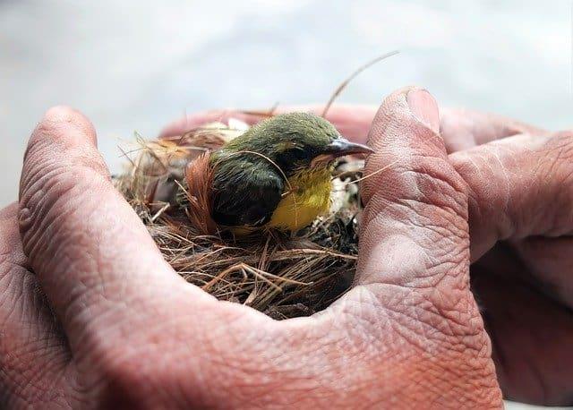 Baby Bird in the Hand