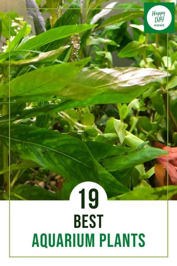 Best Aquarium Plants 1
