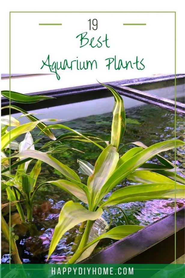 Best Aquarium Plants 2
