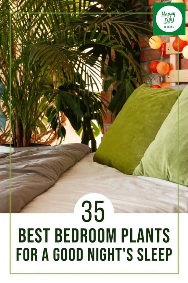 Best Bedroom Plants 1