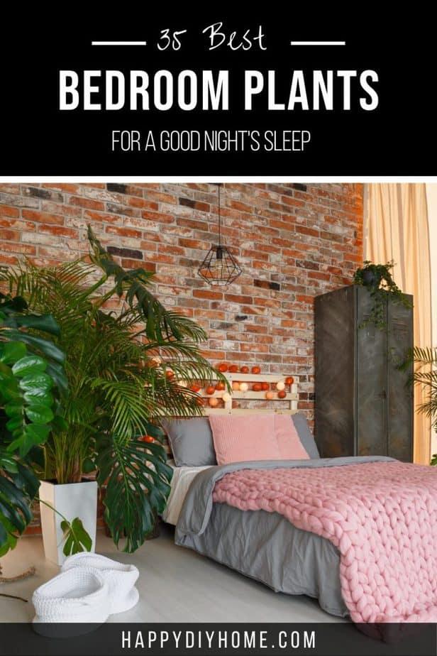 Best Bedroom Plants 2