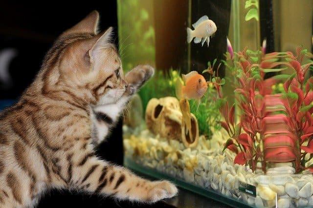 Established Aquarium Plants with Cat and Fish