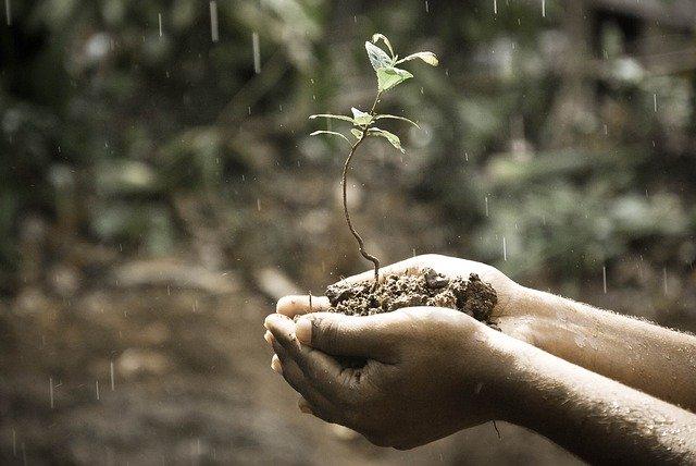 Gardening Benefit 3 Memory